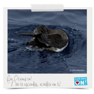 Faz Oceans-on!
